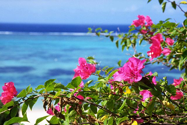 沖縄移住と仕事
