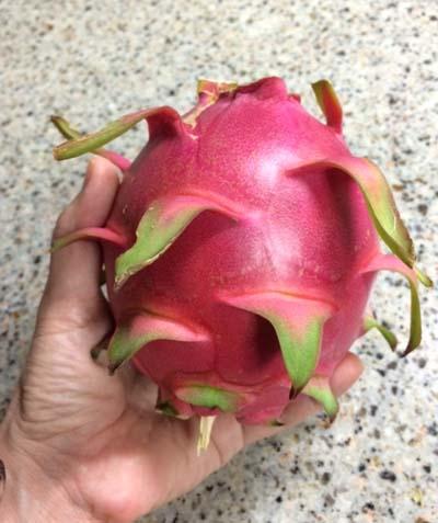 ドラゴンフルーツの実